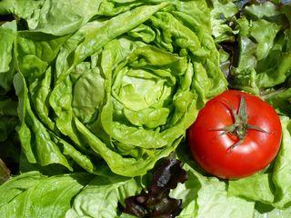 Ökologischer Salat? Sieht zumindest gut aus.